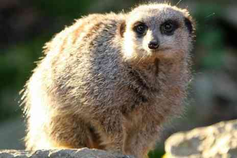 Eagle Heights Wildlife Foundation - Meet the Meerkats for Two - Save 0%