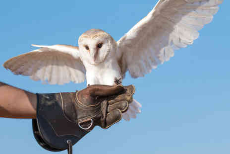 Joes Bows Country Sports - Two hour falconry experience for one person - Save 56%