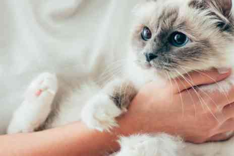 Holly and Hugo - Online cat And kitten care course Cpd certified - Save 88%