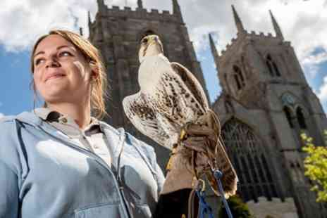 Fens Falconry - Falconry Taster Session or Bird of Prey Experience for One or Two - Save 50%