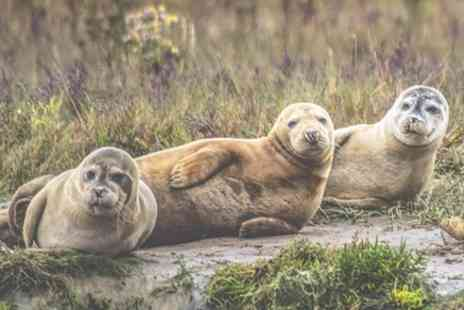 Seal Watching Harwich - Seal watching trip - Save 0%