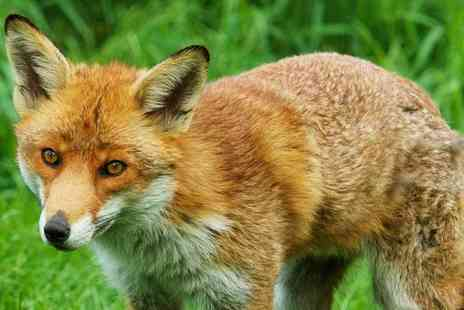 British Wildlife Centre - Amazing Animals Whatever the Weather this Summer - Save 41%
