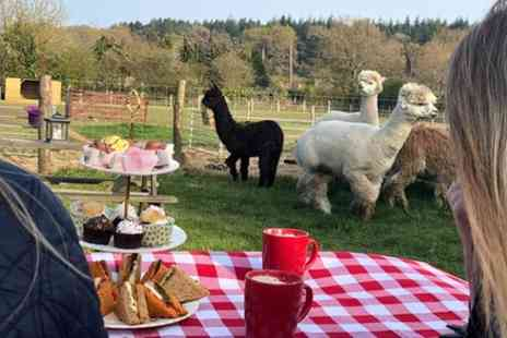 Slowhayes Alpacas - Afternoon Tea with the Alpacas - Save 0%