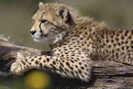 Converge Exhibitions - Wildlife and Safari Travel Show From 12th To 13th October - Save 33%