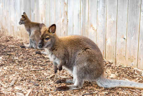 Willow Tree Family Farm - One hour meet the wallabies experience and farm entry for two people - Save 53%