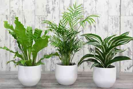 Groupon Goods Global GmbH - Scandi Inspired Mixed House Plant Collection - Save 0%