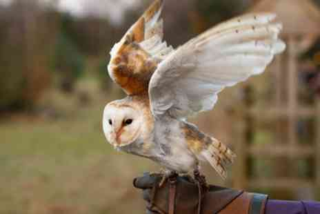 Apollo Falconry - Choice of Hawk Walk or Owl Wander for One or Two - Save 50%