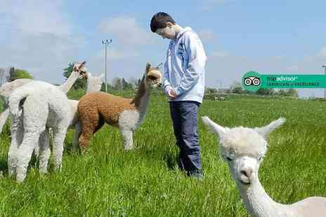Charnwood Forest - One hour cria watch baby alpaca experience with feed included for one person - Save 50%