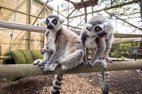 Hoo Farm Animal Kingdom - Family ticket for two adults and up to three children - Save 40%
