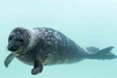 The Cornish Seal Sanctuary - Cornish Seal Sanctuary Entry for One Child, One Adult or Family of Four - Save 26%