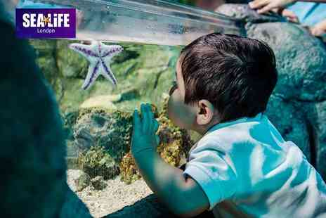 The Scottish SEA LIFE Sanctuary - General entry ticket on Wednesdays only - Save 17%