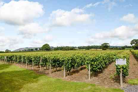 Kerry Vale Vineyard - Self guided tour for two people with wine tasting plus tea and cake - Save 50%