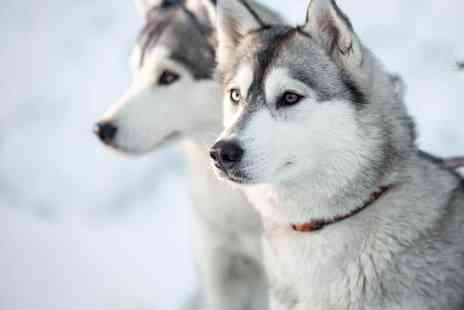 Horse and Husky - One year husky adoption pack chance to meet your sponsored husky - Save 53%