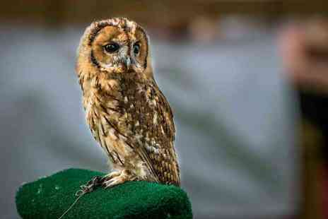 CJs Birds of Prey - Two hour birds of prey experience or owl encounter for one person - Save 77%