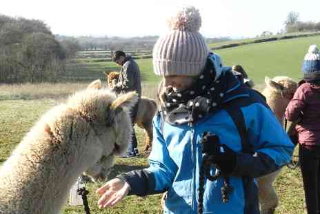 Charnwood Forest - 90 minute alpaca walk in the Derbyshire countryside - Save 60%