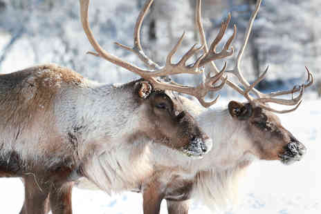 Willow Tree Family Farm - Adopt a Reindeer with a certificate and six months of updates - Save 55%