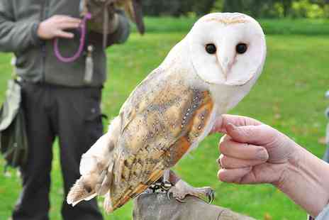 Battlefield Falconry Centre - Two hour birds of prey experience - Save 69%