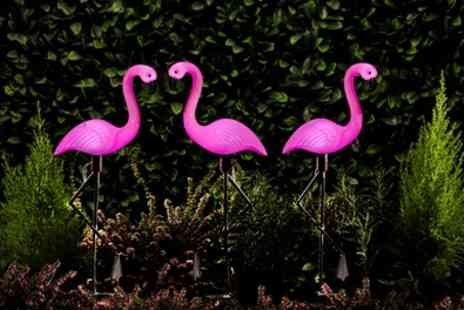 Groupon Goods Global GmbH - Set of 3, 6 or 12 Flamingo Standing Solar Lights - Save 72%